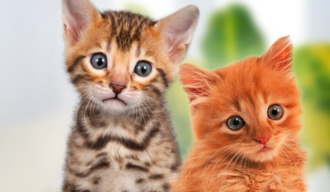 news-banner_ilovemycats