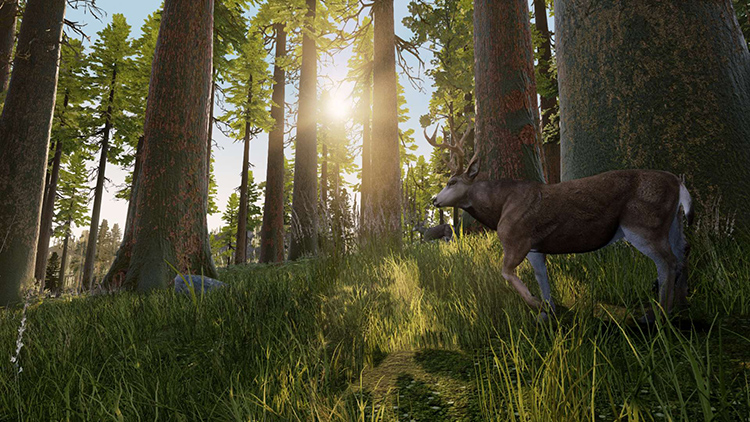 Hunting Simulator - Captura de pantalla#1