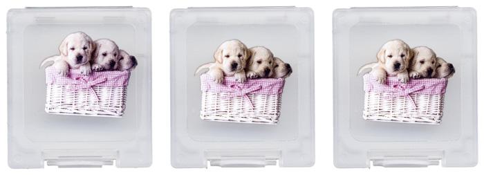 Pack Baby Animals per Nintendo - Immagine #9