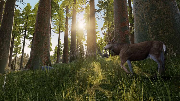 Hunting Simulator - Screenshot#1